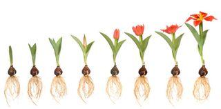 Flowers-growing