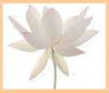 Mindfulness-bell-lotus
