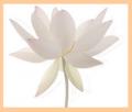 Mindfulness-bell-lotus